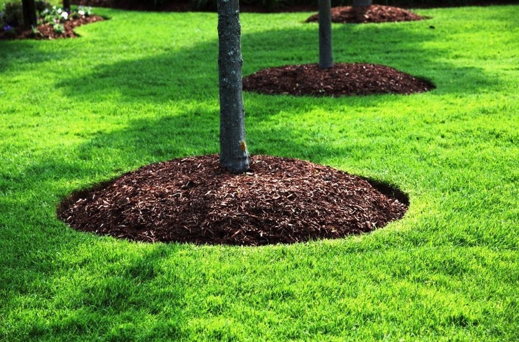 Mulching: The Unsung Hero of Landscaping!