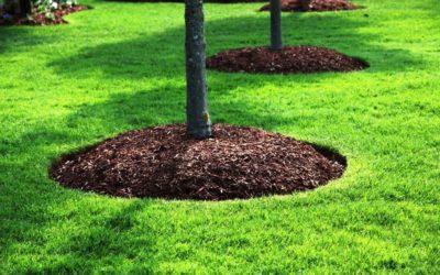 Mulching: The Unsung Hero of Landscaping!