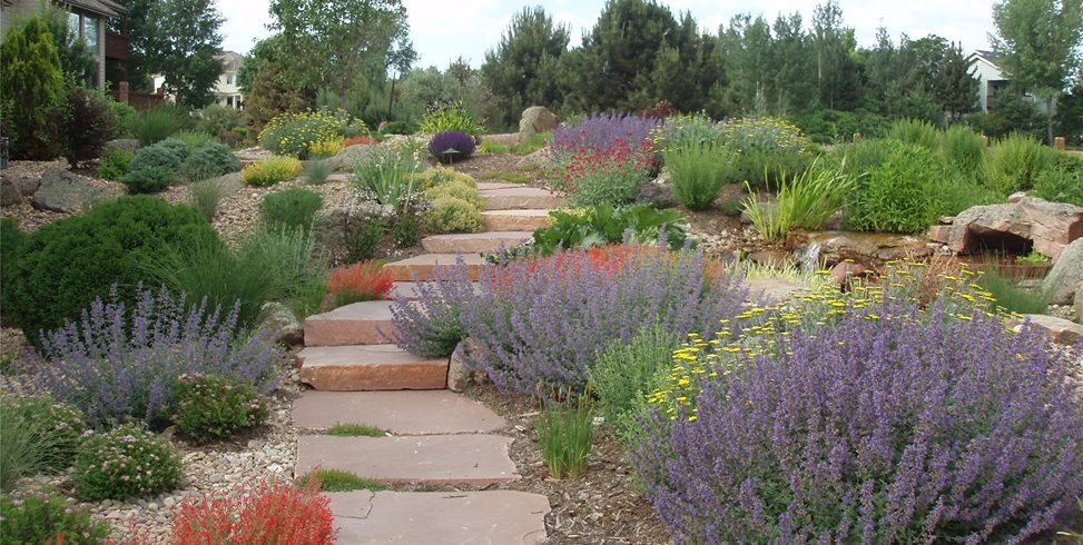 Xeriscaping is the Answer to Gardening
