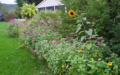 Cultivating a Wildflower Garden