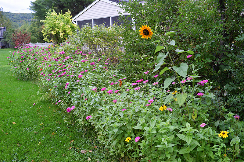 Cultivating a Wildflower Garden