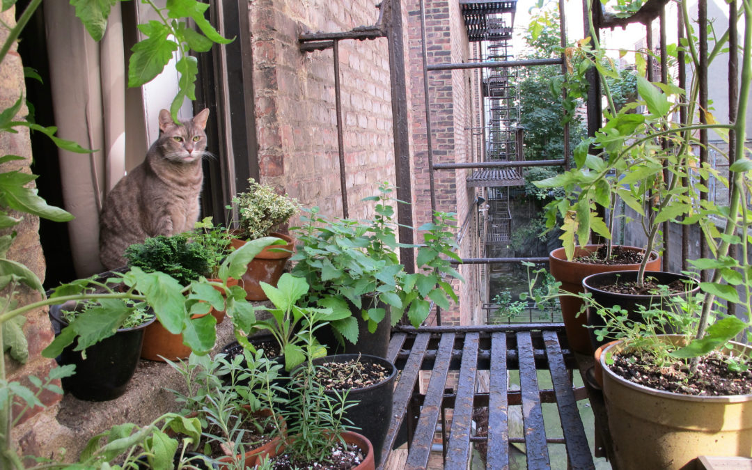 Tips for a Fire Escape Garden