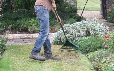 Gardening for Beginners: The Basics