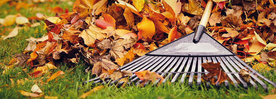 Fall Clean-up Checklist for Your Lawn