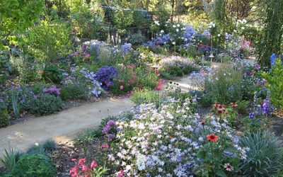 Ideas to Beautify your Lawn and Garden for Fall