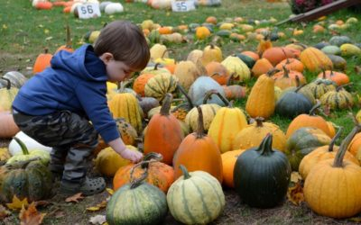 Fun Fall Decorating Ideas for your Lawn